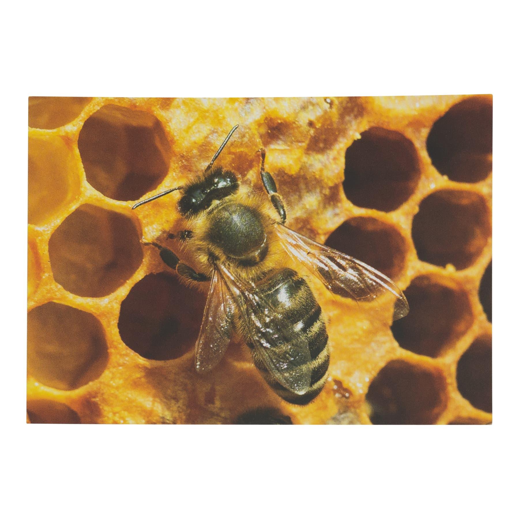 """Postkarte """"Biene aus Wabe""""  0416"""